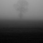 Tree in the Fog by Sam Mortimer