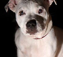 Portrait of Millie 2 by LisaRoberts
