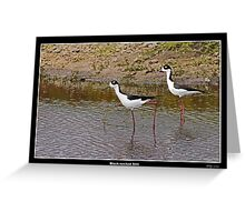 Black necked stilts in water Greeting Card