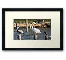 Birds roost Framed Print