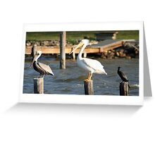 Birds roost Greeting Card