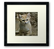 Hello There !  Framed Print