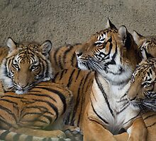 Resting with our Mom by Kathy Newton