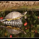 Red eared turtle reflecting by Bigart32