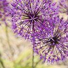 Purple flower of Massachusetts by Bigart32