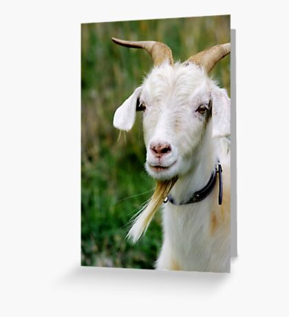 Clementine Greeting Card