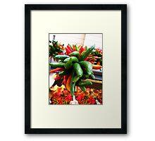 Rainbow of Spice Framed Print