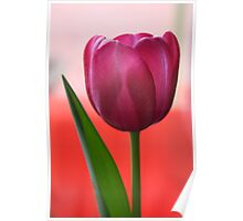 Easter Tulip Poster