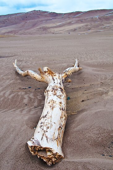 Driftwood on Sand by Gary Lengyel