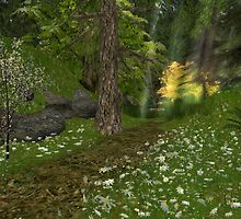 Woodland Path by Beth Gross
