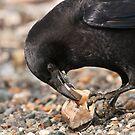 World's Most Intelligent Bird Shows Her Stuff by David Friederich