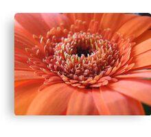 Orange Beauty (Super Macro) Canvas Print