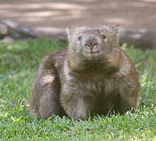 Wombat by smallan