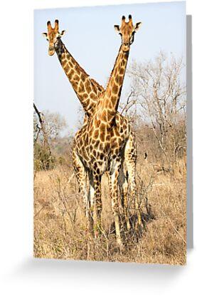 Rare Two Headed Giraffe by Michael  Moss