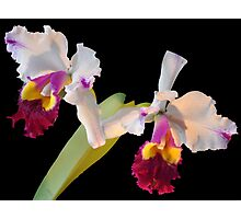 Orchid Glory Photographic Print