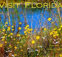 Yellow Wildflowers of Central Florida by Julie Everhart