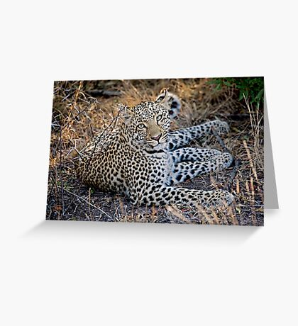 Resting Comfortably  Greeting Card