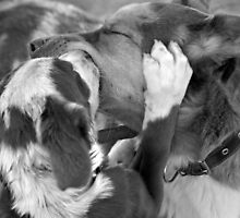 LOVE YOU DAD SMOOCH! by Helen Akerstrom Photography