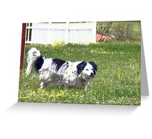 Little Farm Dog Greeting Card