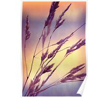 Reeds on the River Tay Poster