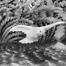flight of the comforter  by Calgacus