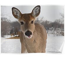 Friendly Young Doe in the Wilderness  Poster