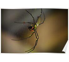 Tropical Arthropod! Poster