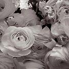 In the flower shop window by Barbara Wyeth