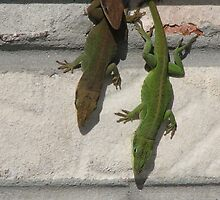 Green Anole Lizards by JeffeeArt4u