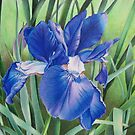 Iris in the wind by lanadi