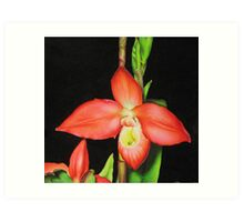 Red Ladyslipper Orchid Art Print
