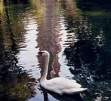 Graceful Swan at Bok Tower Sanctuary Gardens Lake Wales Florida by Rick Short