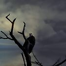 Fierce and Proud Eagle by Judi Taylor