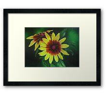 Yellow Rudbeckia Framed Print