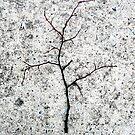 falling through the cracks of life by Veronica Maur'er