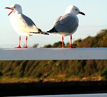 2 birds on a wire by Saltan