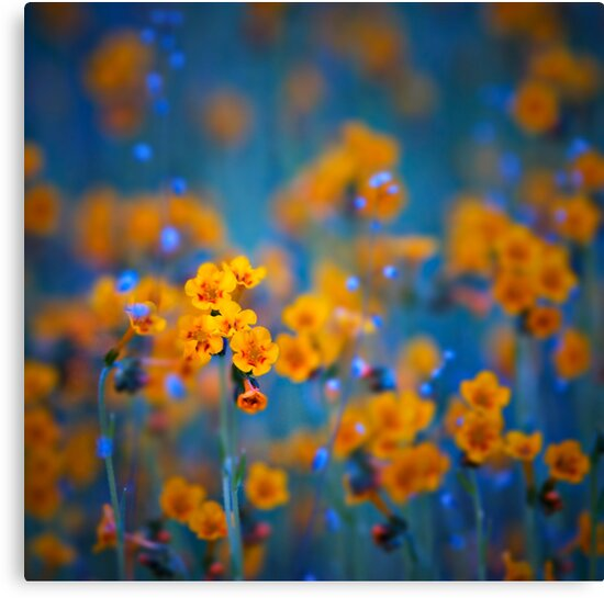 Flower dreams by Tomas Kaspar