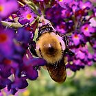 Bee Purple by Gail Jones