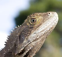 Eastern Water Dragon by PPV247