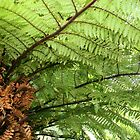 Under The Tree Fern  by coffeebean