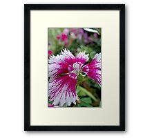 Pink Magic Framed Print