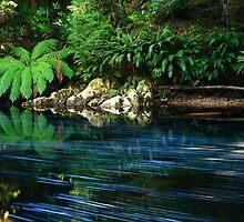 Rapid River  ,nor west Tasmania , Australia by phillip wise