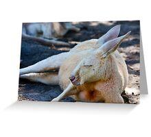 Kangaroo Whiteman Park Greeting Card