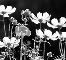 Cosmos in a Cluster by coffeebean