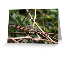Male Blackcap Greeting Card
