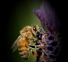 Lavendar and the Bee by Annie Lemay  Photography
