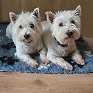 #2  Missy &amp; Ellie, West Highland White Terriers. by Sandra Cockayne