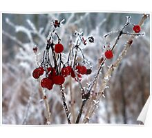 Iced Berries Poster