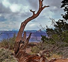 Dead tree in Canyonlands National Park by Linda Sparks