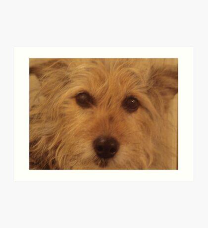 Tina The Terror Terrier! Art Print